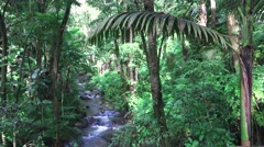 Dense Tropical rain forest with stream flowing through, Hawaii  Stock Footage
