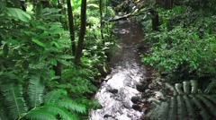 Stream flowing through rain forest Stock Footage
