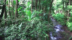 Rain forest environment unspoiled    ,Hawaii  Stock Footage