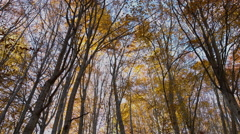 Trees with Falling Leaves in November Stock Footage
