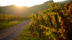 Village and vineyard in Alsace France Stock Footage