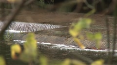 River with waterfall man made with defocus vegetation, pan shot Stock Footage