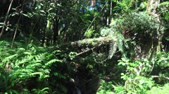 Free flowing organic jungle stream    ,Hawaii  Stock Footage