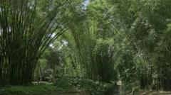 Botanical garden in Rio de Janeiro Stock Footage