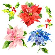 Watercolor hand drawn flowers with foliage and viburnum Stock Photos