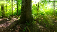 Morning in the forest. Sunlight through the leaves. - stock footage