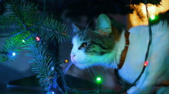 Cat playing under the Christmas tree with Christmas decorations Stock Footage