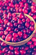 Stock Photo of Organic fresh cranberries in season.