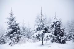Snow covered winter landscape Kuvituskuvat