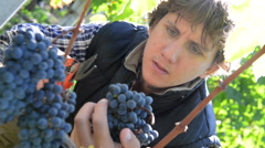 Winemaker cutting grapes in his vineyard Stock Footage