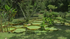 Lily pads in botanical garden - stock footage