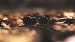 Man steps on nuts Stock Footage