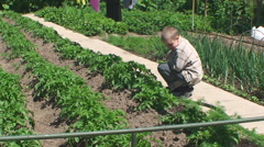 the boy sits in the garden watching the shoots of potatoes - stock footage