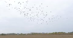 Empty Plot Of Land Dry Grass Birds Fly In The Sky Residential Buildings And Stock Footage