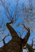 Late fall trees and blue sky Stock Photos