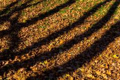 Shadows from trees on fallen autumn leaves - stock photo