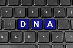 DNA or Deoxyribonucleic Acid on keyboard - stock illustration