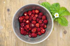 Alpine strawberries Stock Photos