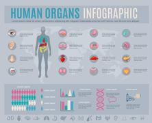 Human Organs Infographic Set - stock illustration