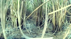 Paddy field Stock Footage
