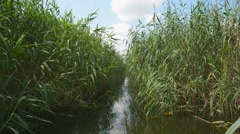 Channel in the reeds among river islands Stock Footage
