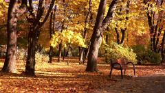 Falling Leaves, Reverse Time Stock Footage