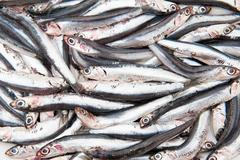 Texture full of many fresh raw anchovy - stock photo