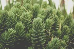 Succulent Plants Stock Photos