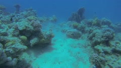 blue rays digging on seabed - stock footage