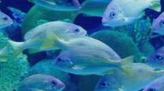 Countless Exotic Fish Swimming Near Reef Stock Footage