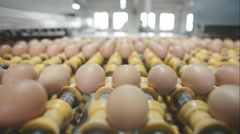Transportation and industrial plant selection for egg. Wide angle Stock Footage