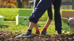 Landscaping and greening of the city - municipal services utilities planting  - stock footage