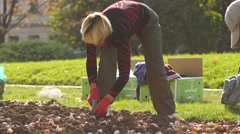 Landscaping and greening of the city - municipal services utilities planting  Stock Footage