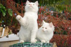 Two Kittens on Roll of Garden Fencing Stock Photos