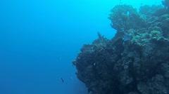 filefish on reef - stock footage