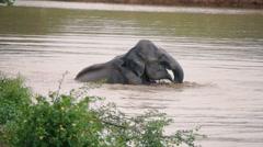 Elephants take a bath in Kwae-noi river. Kanchanaburi, Thailand Stock Footage