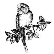 Illustration wavy parrot on brunch fo pet shop commercial - stock illustration
