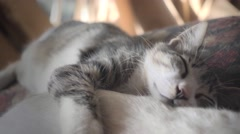 Kitten taking a nap with mom - stock footage