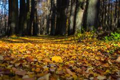 Autumn city park. Stock Photos