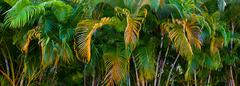 Panorama of colorful palm tree leaves Stock Photos