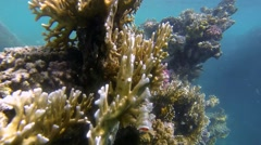 Colorful coral reef in egypt Stock Footage