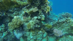 Colorful reef and various fish Stock Footage