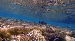 Colorful reef and many fish Stock Footage