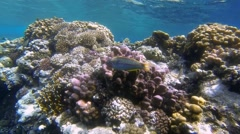 Colorful coral reef in the red sea Stock Footage