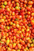 Solanum lycopersicum tomatoes Kuvituskuvat