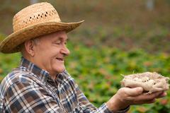 Cheerful old male worker with organic product - stock photo