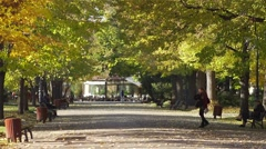 Girl crosses the alley in the park in slow motion in the autumn Stock Footage