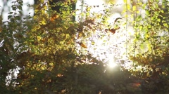 Bush sunset illuminates with a soft light in the autumn in slow motion Stock Footage