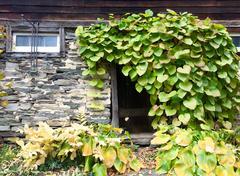 Leafy Doorway - Farmhouse Stock Photos