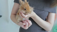 Woman holding little cute rabbit, close up Stock Footage